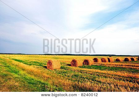 Belorussian Landscape Summer Harvest