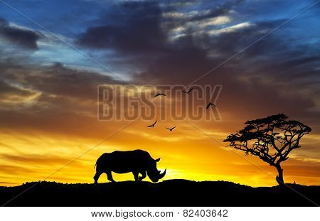 silhouette of a rhinoceros africa Hill