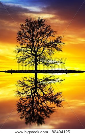 silhouette of a tree on the lake