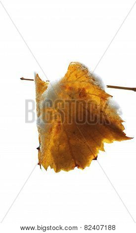 Yellow Leaf On The Branch Under The Snow