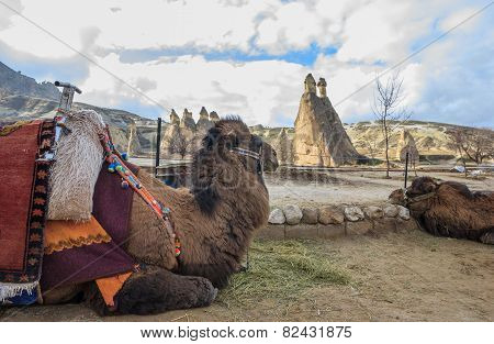 Pasabag With Camels