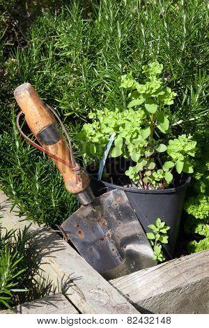 Stainless Steel Garden Trowel In Herb Garden