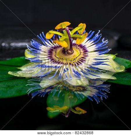 Beautiful Spa Still Life Of Passiflora Flower On Green Leaf, Zen Basalt Stones With Drops In Water,