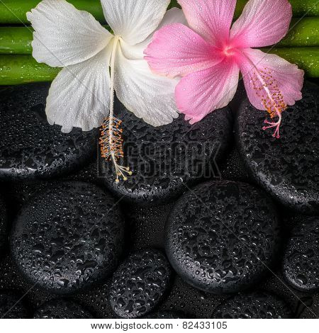 Spa Concept Of Zen Basalt Stones, White, Pink Hibiscus Flower And Natural Bamboo With Drops, Closeup