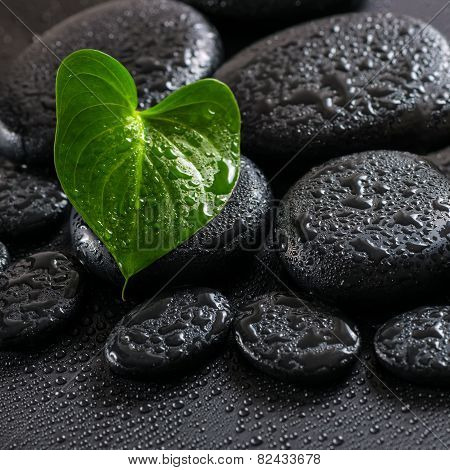 Beautiful Spa Still Life Of Green Leaf Calla Lily On Zen Basalt Stones With Drops, Closeup