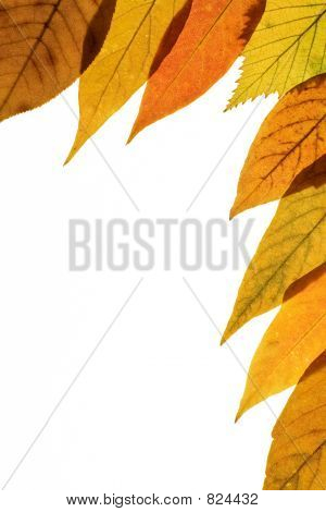 Fall background 3