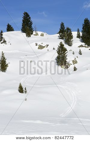 Ski Run Between Green Firs In The Snowy Austrian Alps