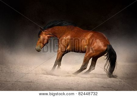 Horse gallop in desert