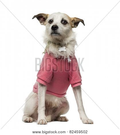 Crossbreed dog (4.5 years old) dressed