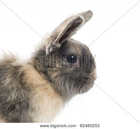 Close-up of a Rabbit (4 months old)