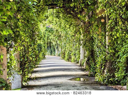 Green archway in the park at summer