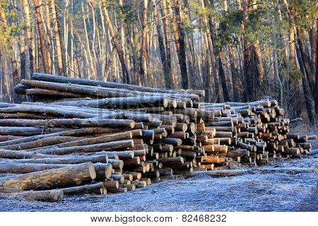frosted wooden logs in forest