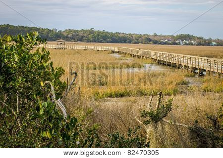 Beauty Of The Carolina Low Country