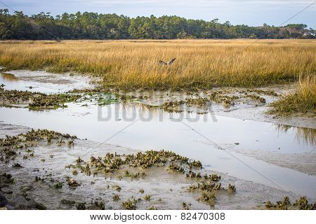 Coastal Carolina Low Country