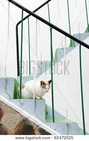 Cat in San Sebastian de la Gomera, Canary Islands, Spain