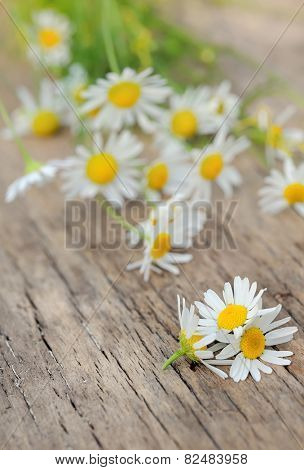 Chamomile flowers on a wooden background