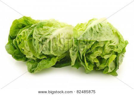 freshly harvested green