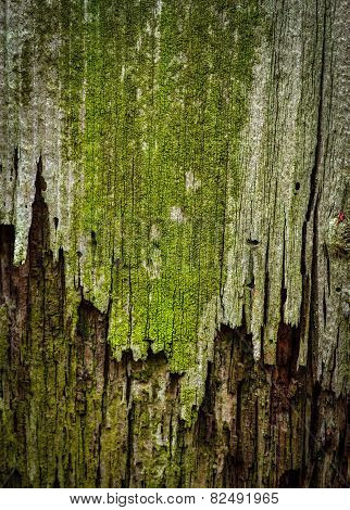 Green Moldy Old Wood