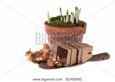 Bulb Of Spring Flowers, Old Trowel Isolated On White