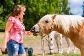 stock photo of feeding horse  - Woman feeding horse on pony farm - JPG