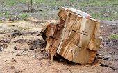 picture of deforestation  - Urban deforestation - JPG