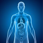 foto of organ  - Two or more organs working together in the execution of a specific body function form an organ system - JPG