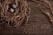 image of nest-egg  - quail organic eggs with straw in nest on rustic wooden background - JPG