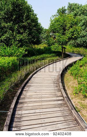 Wooden pathway though forest