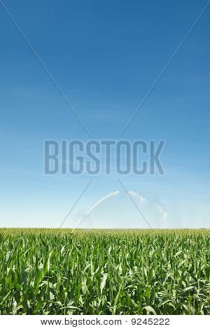 Cornfield irrigation