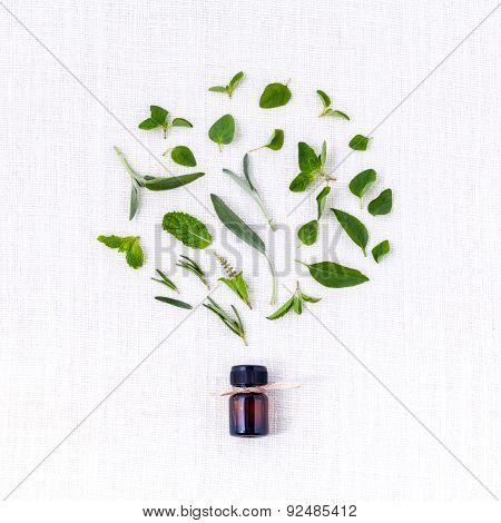 Bottle Of Essential Oil With Herb Holy Basil Leaf, Rosemary,oregano, Sage,basil And Mint On White