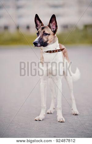 Not Purebred Dog