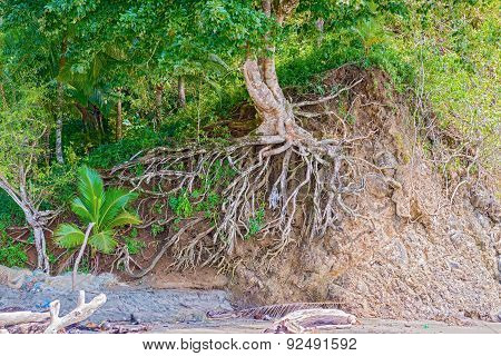 Washed Out Tree Roots On The Rock