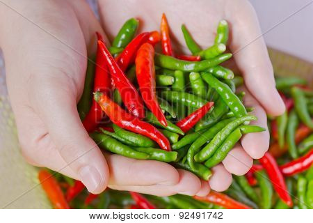 Woman Hands Holding Fresh Chili Peppers