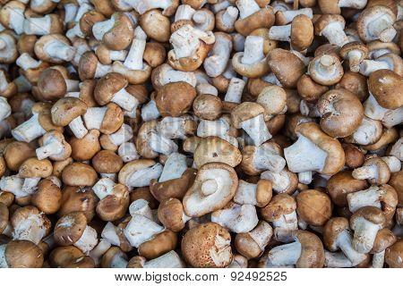 Shiitake Mushrooms  For Sale At Market, Thailand