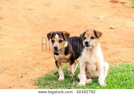 Two juvenile dogs or puppies with curious expression and playful mood