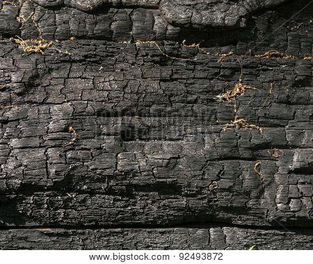 Charred Log