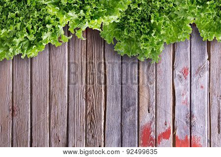 Overhead Border View Of Lettuces On Market Table