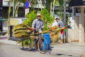 picture of broom  - PHUKET THAILAND  - JPG
