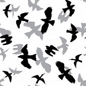 picture of snipe  - vector seamless pattern with black and grey birds silhouettes at white background - JPG