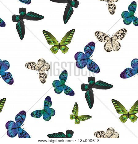 Seamless pattern with vintage green and blue tropical butterfly on the white background. Vintage vector illustration