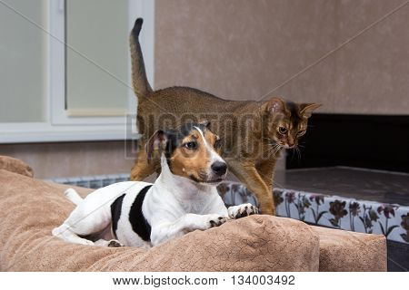 Cat And Dog Together On Back Of Couch