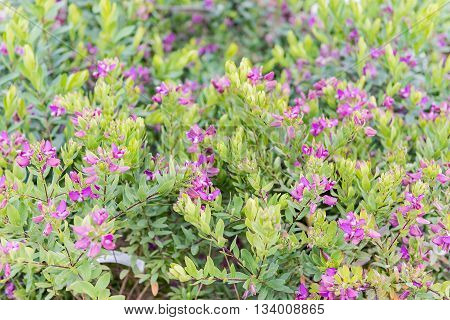 Bushes With Green And Purple Flowers