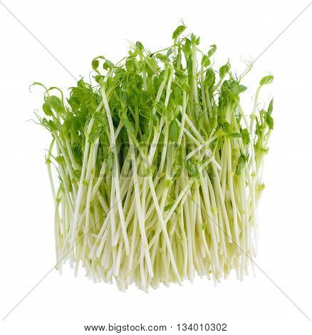 fresh green pea sprouts  isolated on a white background