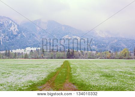 Spring Snow In Fresh Green Meadows. Straight  Muddy Tractor Way.