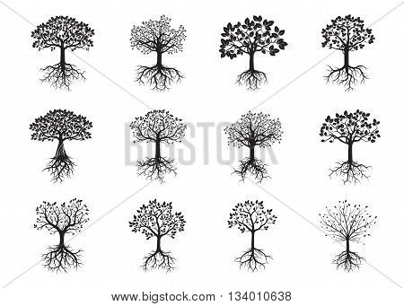 Set of Black Trees and Roots. Vector Illustration.