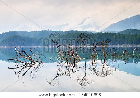 Branch Of Fallen Tree Sticking Out From Blue Water Of Mountain Lake