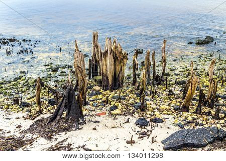 Bizarre Old Rotten Trees At The Coast