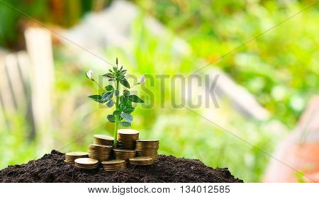 money coins. Business investment growth concept. saving concept
