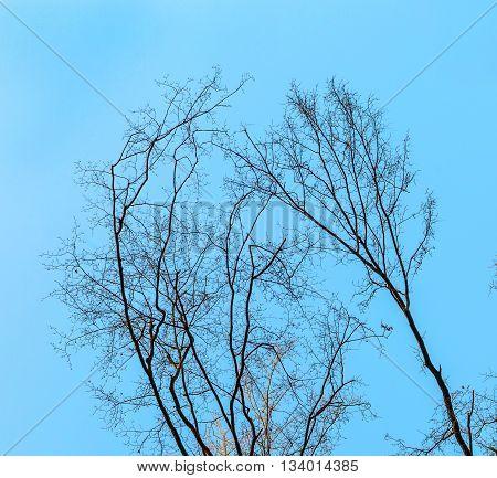 Crown Of Trees Under Blue Sky