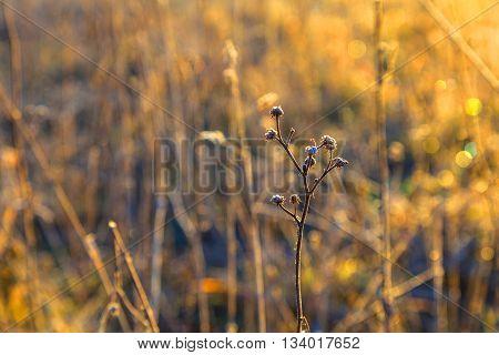 Frozen Plants In Meadow With Backlight In Wintertime